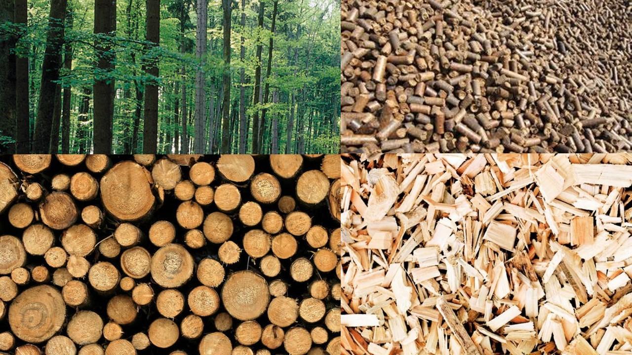 biomasse lessons tes teach